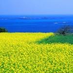 Jeju_Island nền