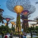 Mua vé máy bay giá rẻ đi Singapore ở đâu