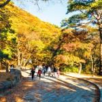Trải nghiệm mùa thu tại Busan