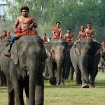 Lễ hội voi Surin nổi tiếng ở Thái Lan