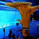 Công viên hải dương Chimelong hoành tráng