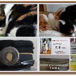 Đến ga Kishi thăm trưởng ga mèo Kama