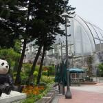 Thăm 2 chú gấu trúc khổng lồ ở Macao