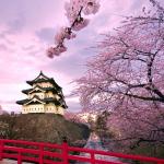 Tết này đi Nhật Bản ngắm sắc anh đào nở rộ