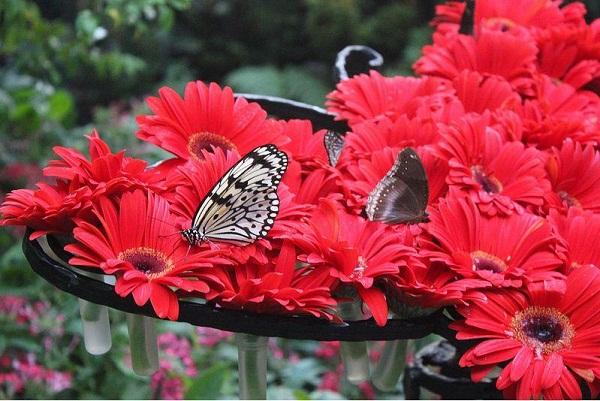 Công viên bướm