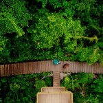 the_forests_of_pulau_ubin