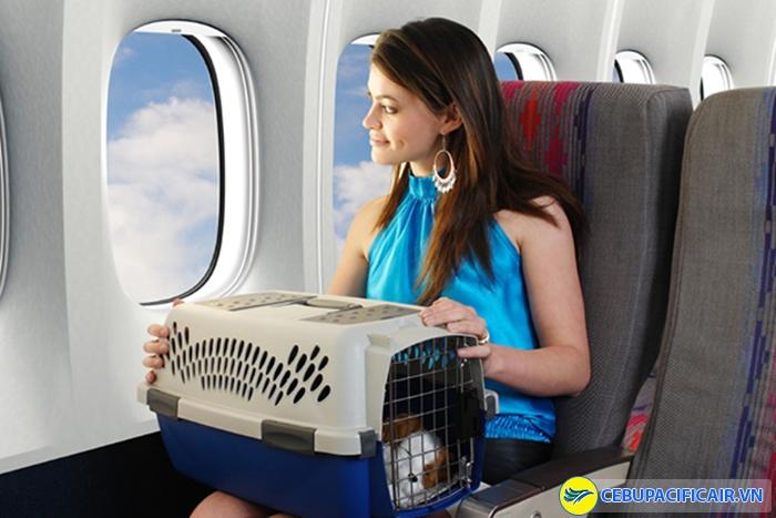 Mang vật nuôi lên máy bay phải trả thêm phụ phí
