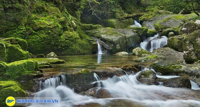 Rừng mưa Yakushima