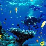 Scuba Diving – Hoạt động thám hiểm thế giới sinh vật