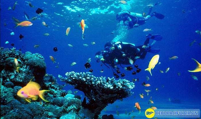 Scuba Diving - Hoạt động thám hiểm thế giới sinh vật