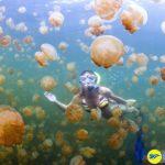 Lặn cùng đàn sứa ở hồ sứa