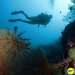 Lặn ngắm săn hô ở Moalboal