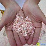 Xác vỏ sò màu hồng làm nên màu hồng của bãi biển